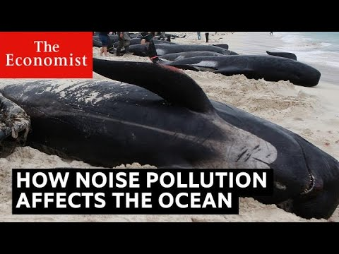 How noise pollution threatens ocean life | The Economist