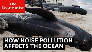 How noise pollution threatens ocean life | The Economist