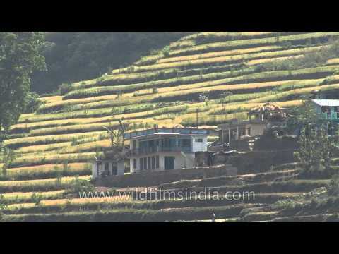 Terrace farming on the Himalayan slopes in Uttaranchal, India( view from the foothills)