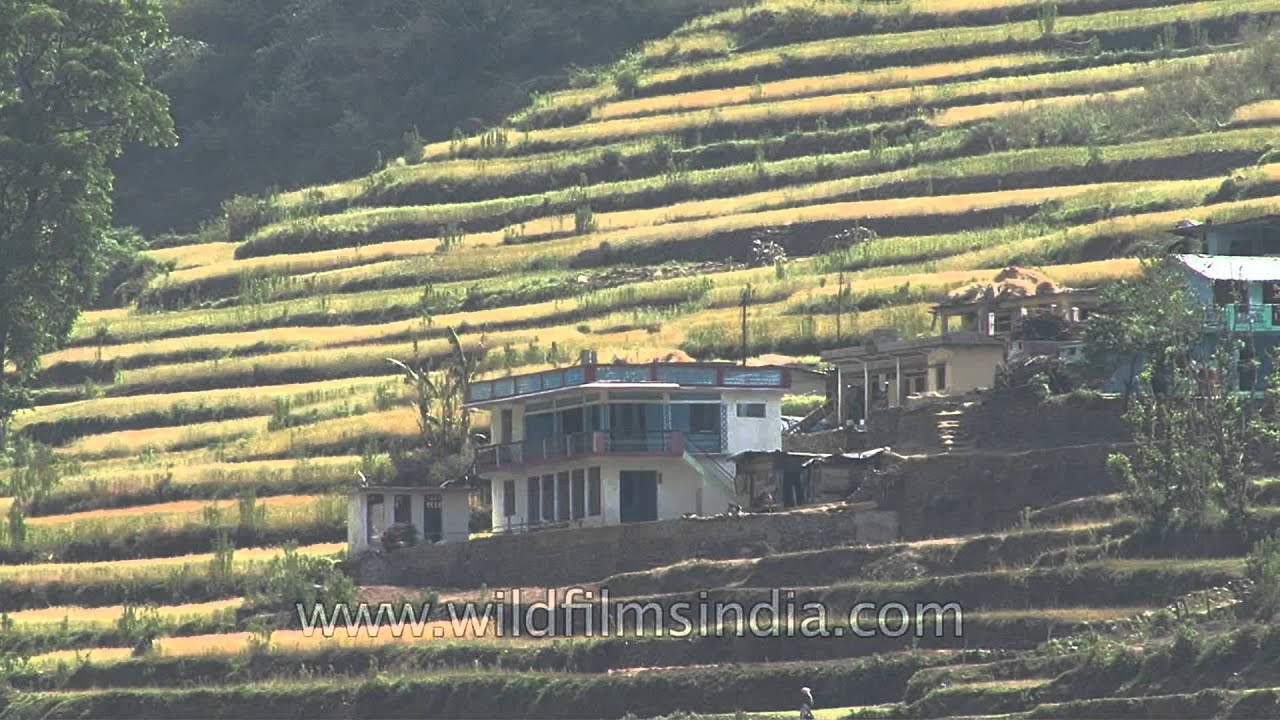 Terrace farming on the himalayan slopes in uttaranchal for Terrace cultivation