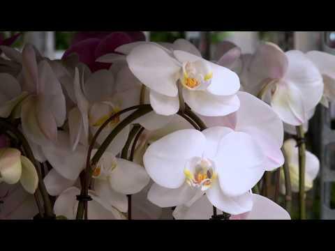 Heemskerk Flowers
