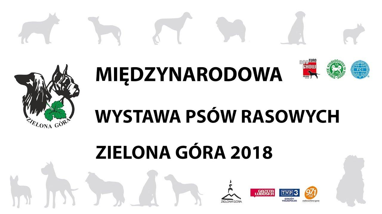 W Mega Międzynarodowa Wystawa Psów Rasowych - Zielona Góra 2018 IG99