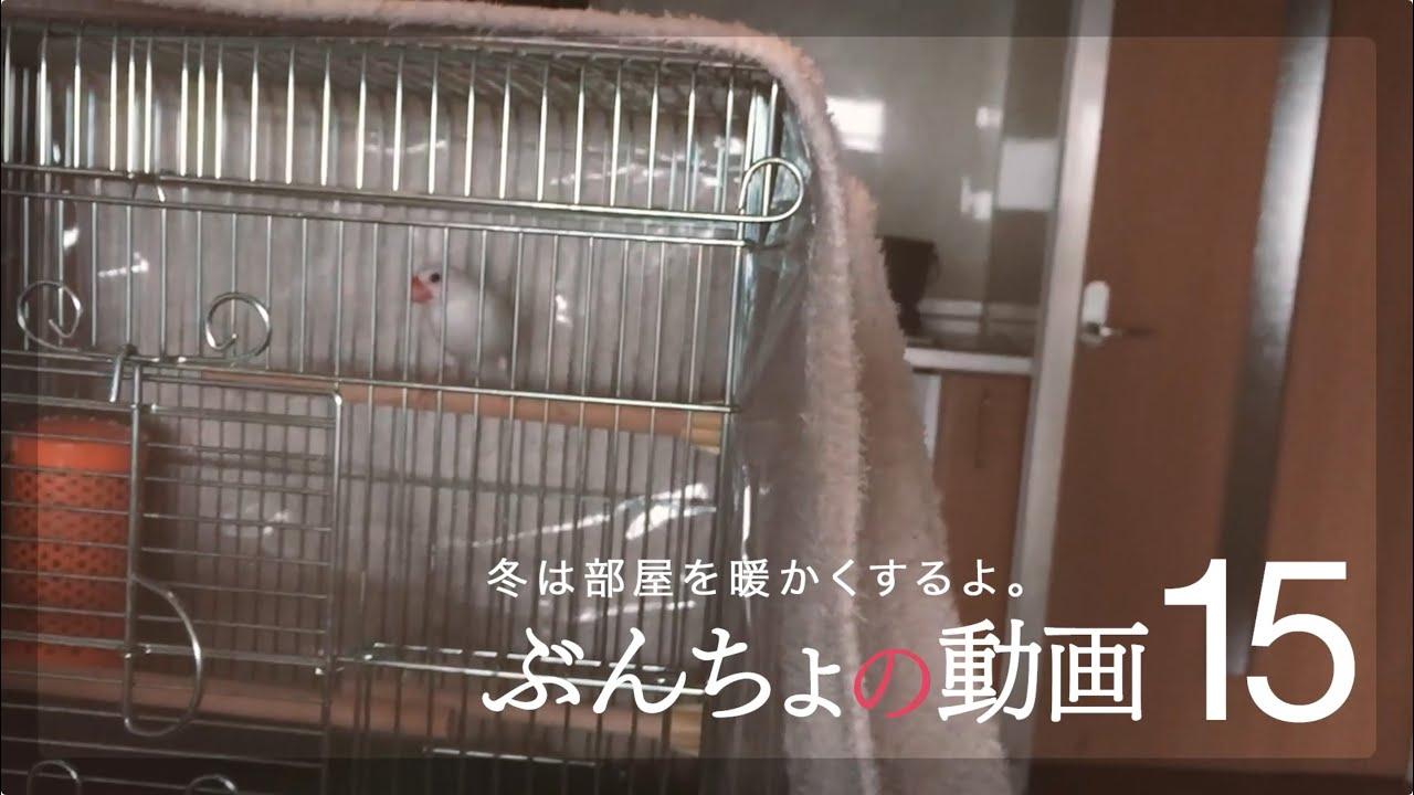 ぶんちょの動画】#15 冬は部屋を暖かくするよ。【白文鳥】 - youtube