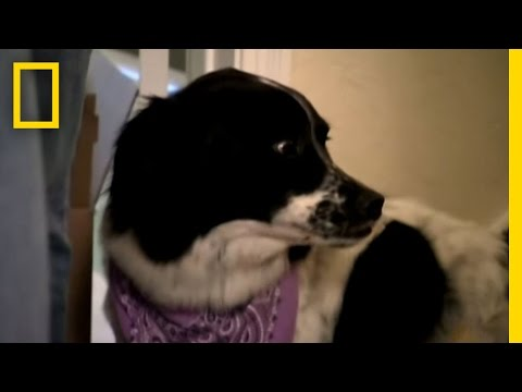 Jumping Border Collie | Dog Whisperer