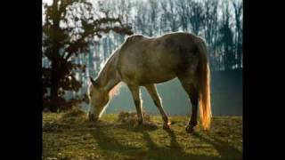 Visions of a Gray Horse