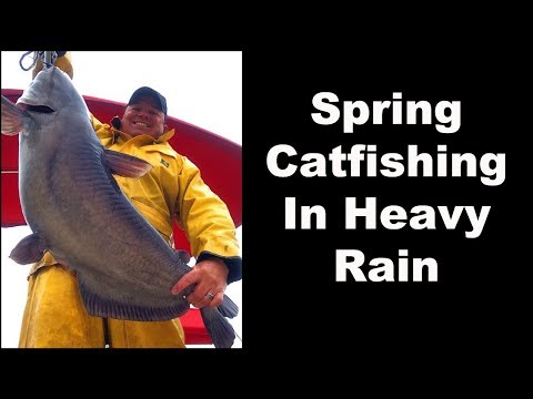 Bank Fishing Creeks For Catfish - Getting Kinda Skunky from YouTube · High Definition · Duration:  10 minutes 41 seconds  · 11,000+ views · uploaded on 3/2/2017 · uploaded by Pole Bender