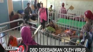 Demam Berdarah Dengue (DBD) telah merenggut dua nyawa warga Kabupaten Jombang, Jawa Timur, di awal t.