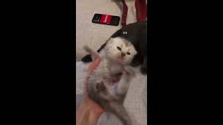 RELAXING CAT VIDEO 10 可愛貓BB  CUTE BABY CAT