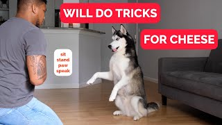 My Dog Does FUN TRICKS!