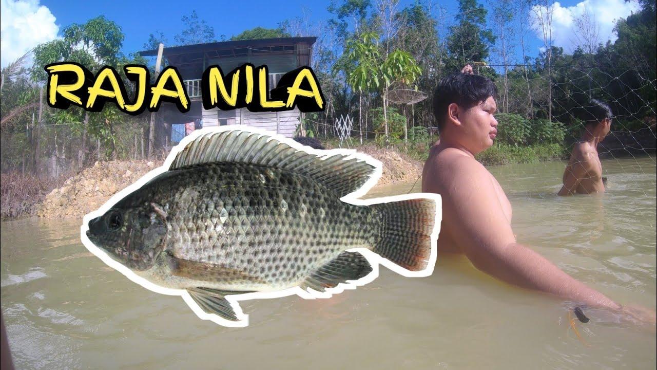 Download Mukat Ikan Ju..!!!