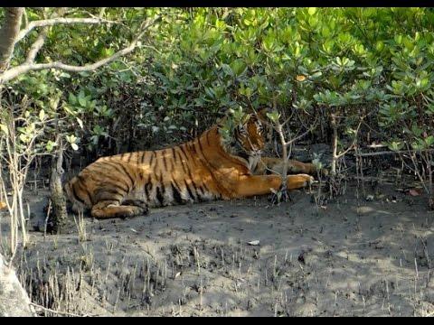 #Sundarban -Largest Mangrove Forest in the World - Inside the Sundarbans