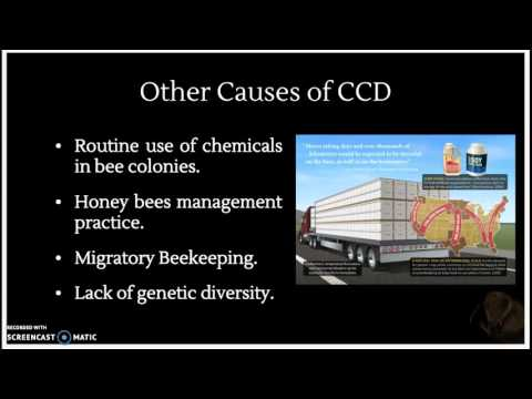 Group #14 Colony Collapse Disorder Disappearing Honeybees