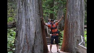 Giant Cedar Boardwalk Trail, Revelstoke National Park, BC
