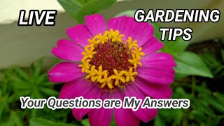 Question-Answers Session/LIVE CHAT Replies/Answering Queries of Viewers.