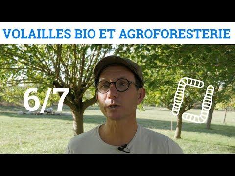 6/7 - Nicolas PETIT - Volaille Bio et Agroforesterie - L'alimentation des volailles
