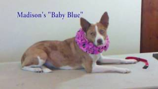 How to Make a Cute Dog Ruffle Collar