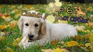 Топ 6 Самых добрых собак