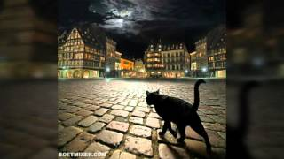 Как видят наш мир коты