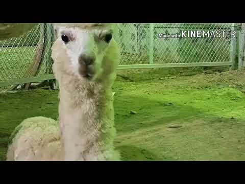 Jeddah zoo/circus/festival