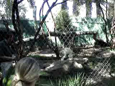 Siegfried Roy 39 S Secret Garden Dolphin Habitat At The Mirage In Las Vegas Youtube
