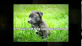 Dog Training New Jersey | Call 866-592-2742
