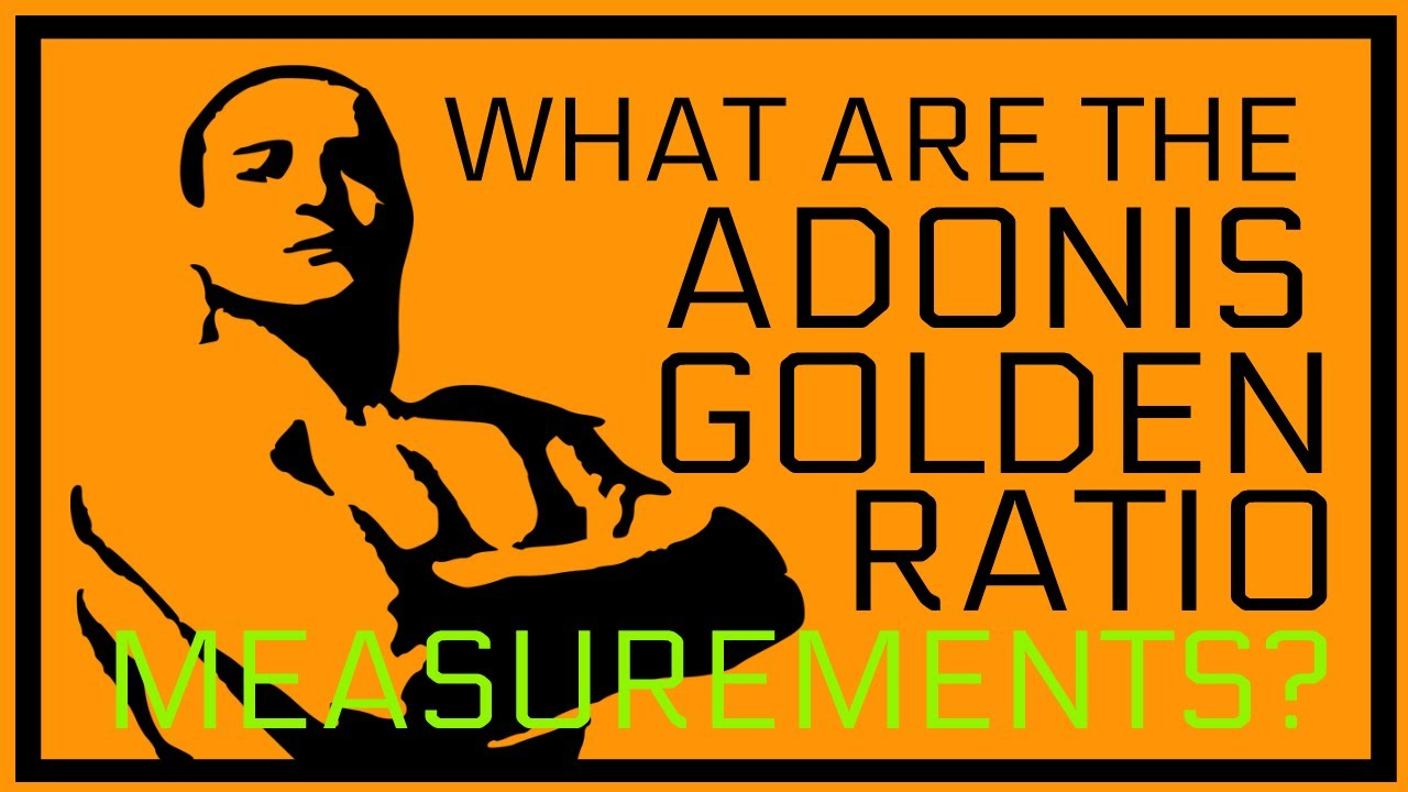 Adonis Golden Ratio Measurements | Adonis Golden Ratio Sizes