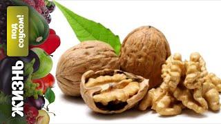 Жизнь под соусом: грецкий орех – праздник для мозгов!