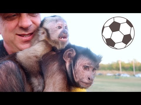 Monkeys Soccer Field FUN! GOOOAL!