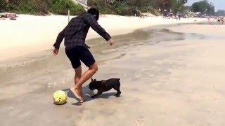 Собаки в Хуахине играют в пляжный футбол.