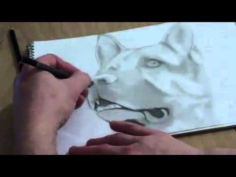 Dessin berger allemand youtube - Coloriage berger allemand ...
