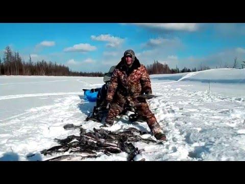 хариус зимой. диалоги о рыбалке