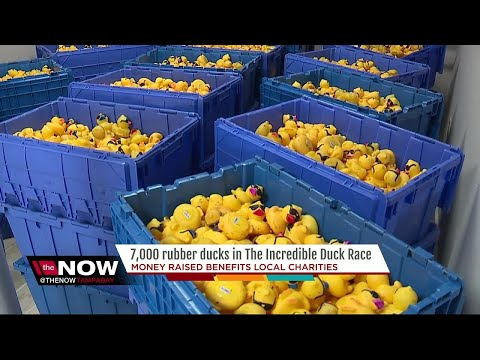 The Incredible Duck Race Boasts 7,000 Rubber Duck Race For Charity