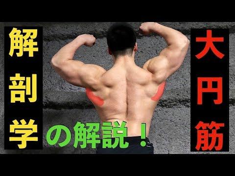 筋トレ初心者向け】大円筋の解剖学 - YouTube