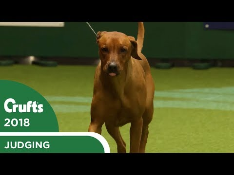 Junior Warrant Competition Final | Crufts 2018