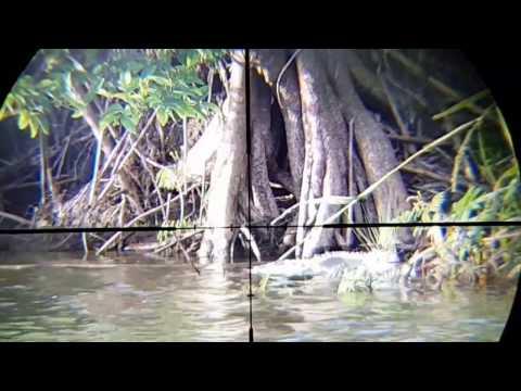 Iguana Hunting Puerto Rico Test Discovery Scopecam Adapter1