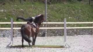 Mega Horse Bloopers. Big bucks, rears, falls and nasty stuff 3 (2013)