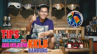 BENING PICTURES: Tips Mengatasi Love Bird bunyi di Jeruji Ala Ade Sulistio (KKLB Bandung)