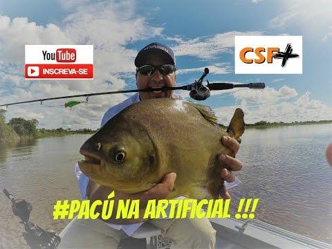 Pesca Pantanal - Pacu na Isca Artificial - Albuquerque - Ms. #18