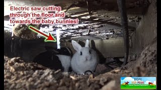 Download We had to use an electric SAW to save this family of homeless bunnies!!! DANGEROUS RESCUE!!! Mp3 and Videos