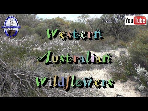Western Australian Wildflowers - D