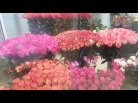 Цены на розы в г Иваново.