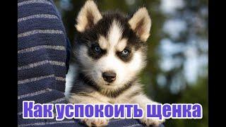 Как успокоить собаку / How to teach your dog to calm down
