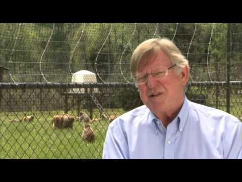 Dr. Steve Suomi : Breakdown of Research
