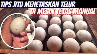 cum să eclozi ouă