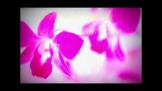 Utada- Every heart ( english version ) (german translation) // Lyrics on screen//
