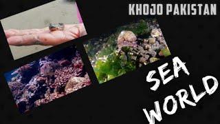 Fishing sea world deep sea life | Beauty of nature.