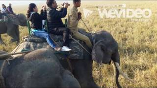 В мире животных, Индия