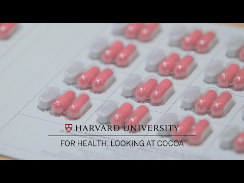 Harvard Medical School researchers look at cocoa for health