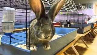 Кролики ласкучие и тискучие и любят когда их гладят | Funny Pet Rabbits(Организаторы мероприятий, берите в аренду оборудование в компании