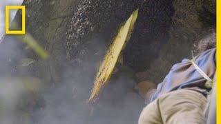 Collecting Honey the Hard Way | Primal Survivor